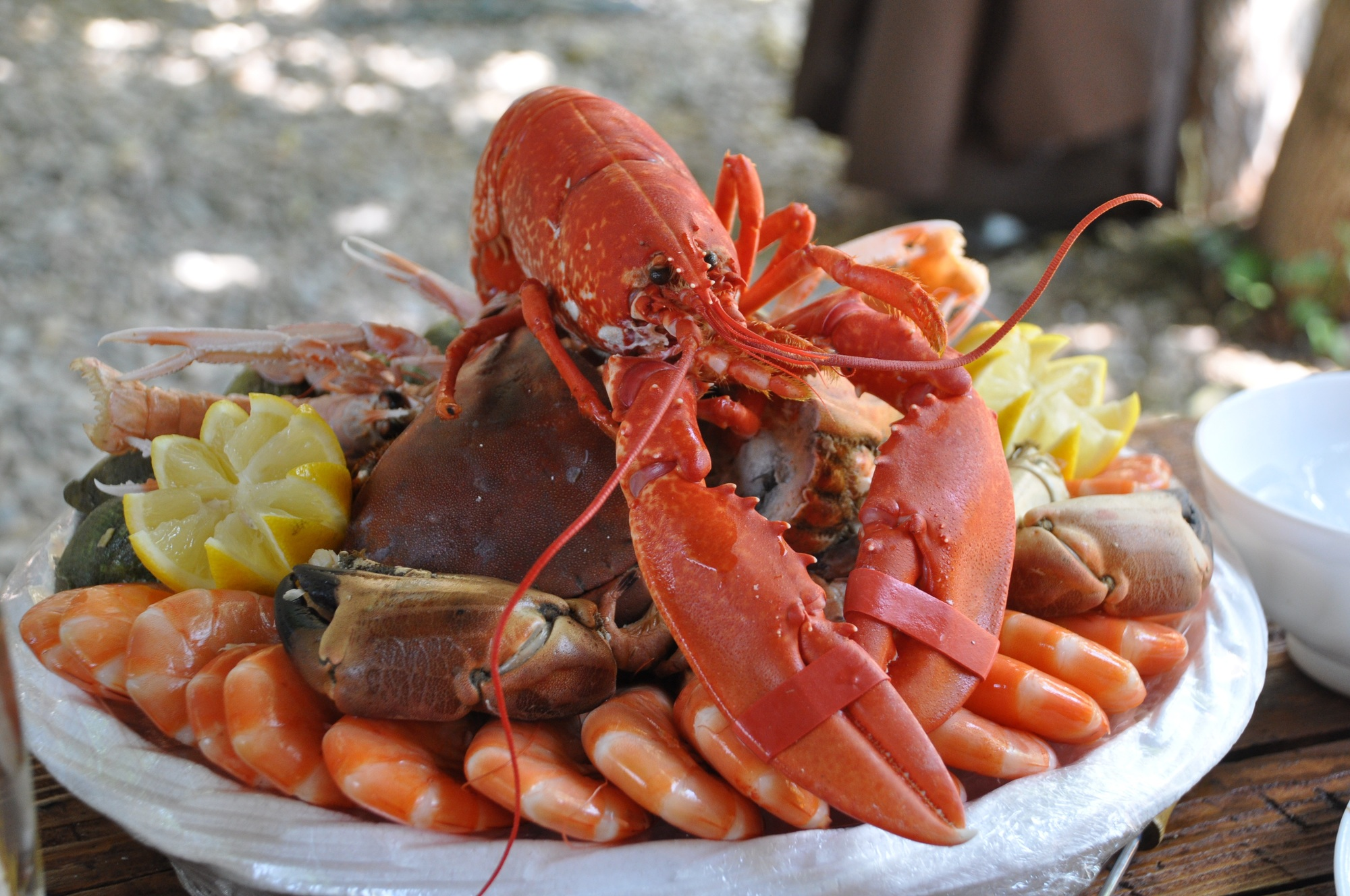 Top 3 Pro Tips for Steaming Lobster